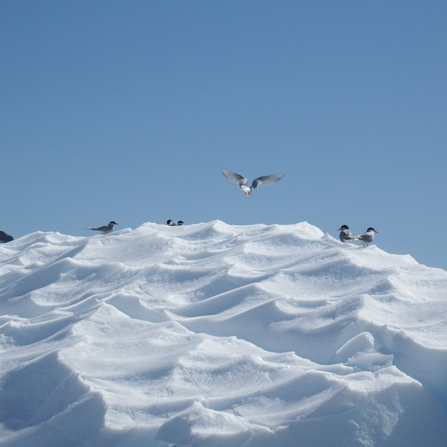 370.JPG - 南極