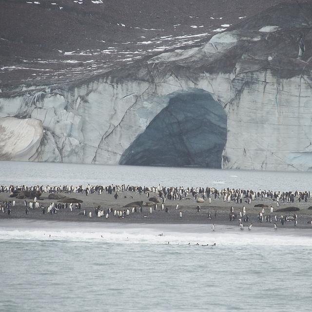 IMG_6332.JPG - 南極