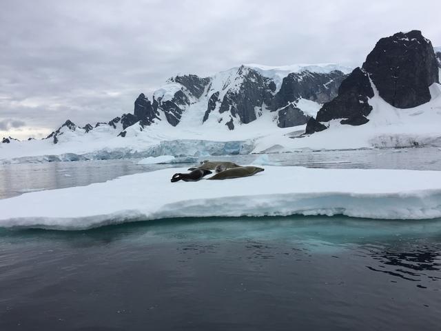IMG_7329.JPG - 南極