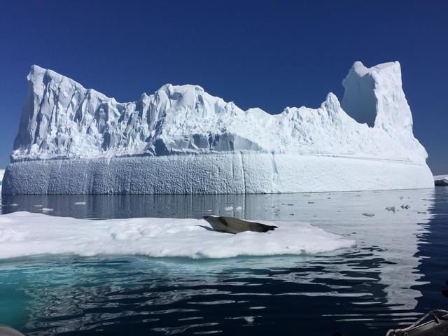 IMG_7913.JPG - 南極
