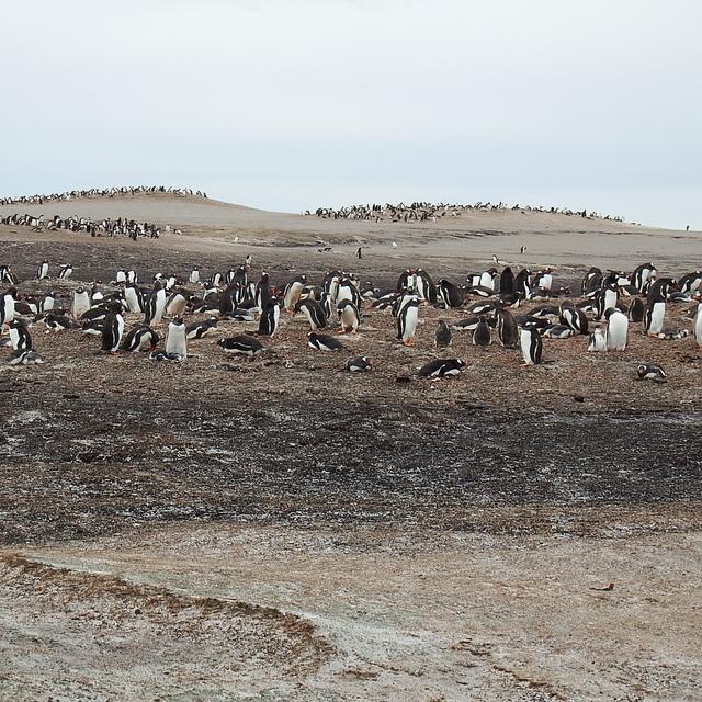 241.JPG - 南極