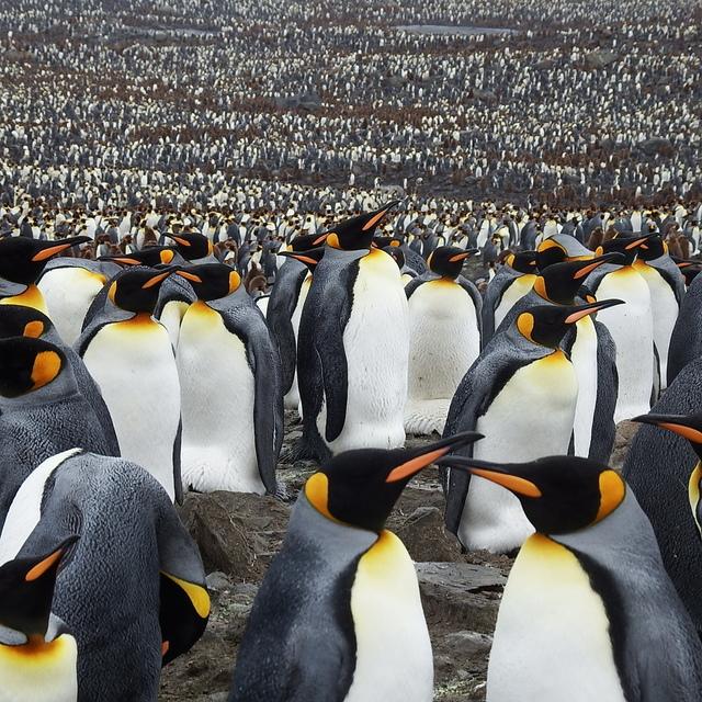 IMG_6306.JPG - 南極