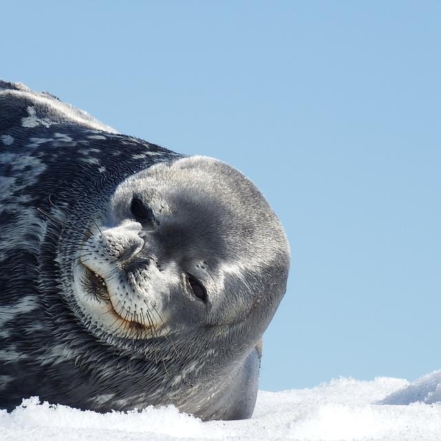 IMG_8067.JPG - 南極