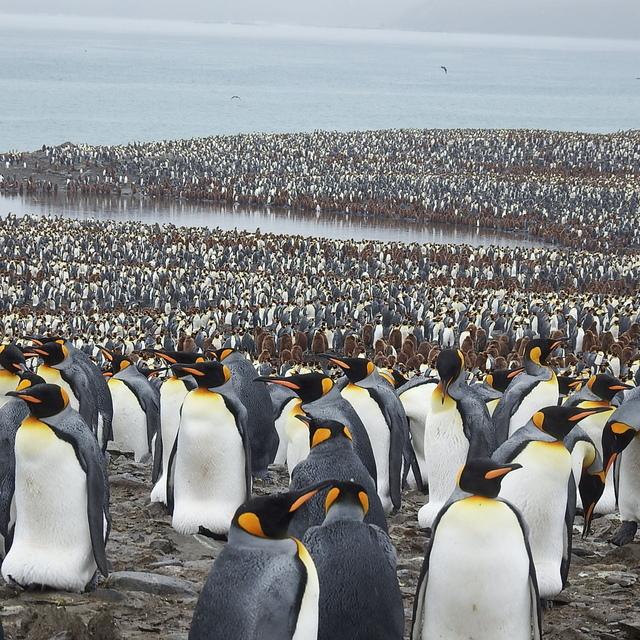 IMG_6295.JPG - 南極