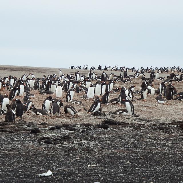 237.JPG - 南極