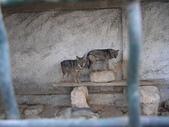 北非突尼西亞摩洛哥40天2010/01/06---02/19:IMGP0153.JPG