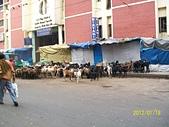 South India南印度39天旅遊照片:100_1530.JPG