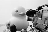 灰色小鴨:
