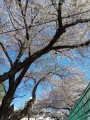 東京:IMG_20170413_084133.jpg