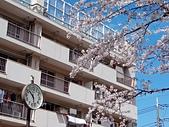 東京:IMG_20170412_102815.jpg