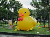 足跡-南部:黃色小鴨