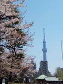 東京:IMG_20170413_114422.jpg