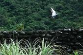 2009楊梅資青龜山島之旅:2009-04-12楊梅資青龜山島之旅 214-1