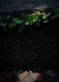 2009楊梅資青龜山島之旅:2009-04-12楊梅資青龜山島之旅 145-1