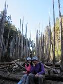 103年玩登小百岳照片:103年1月11日忘憂森林