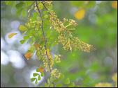 【2015線上賞花】:墨水樹1.jpg