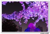 聚  竹蚵地景藝術:IMGP5885.JPG