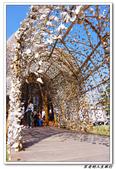聚  竹蚵地景藝術:IMGP5984.JPG