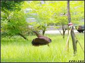 黑冠麻鷺:IMGP0795.JPG