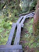 太平山-翠峰湖環山步道:SANY0765.JPG