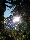 太平山-翠峰湖環山步道:SANY0773.JPG