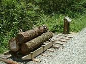 礁溪林美石磐步道:DSCF0900