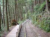 太平山-茂興懷舊步道:DSCF0099
