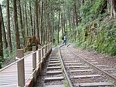 太平山-茂興懷舊步道:DSCF0101
