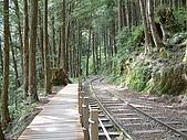 太平山-茂興懷舊步道:DSCF0102
