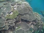 我要成為海賊王(蘇澳sup+浮潛):豆腐岬海底景觀.JPG