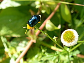 太平山-翠峰湖環山步道:環山步道-昆蟲