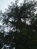 棲蘭馬告100神木生態之旅:XX神木