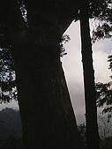 棲蘭馬告100神木生態之旅:PIC_0039