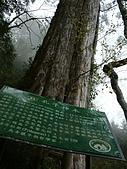 棲蘭馬告100神木之旅:DSCF5110