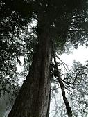 棲蘭馬告100神木之旅:DSCF5112