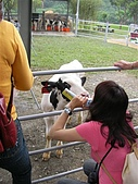 2009宜蘭綠色博覽會:FUN牛館 (7).JP