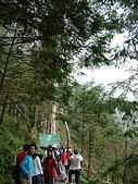 棲蘭馬告100神木之旅:DSCF5114