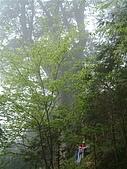 棲蘭馬告100神木之旅:DSCF5118