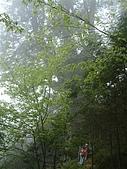 棲蘭馬告100神木之旅:DSCF5119