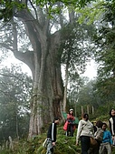 棲蘭馬告100神木之旅:DSCF5122