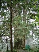 棲蘭馬告100神木之旅:DSCF5133