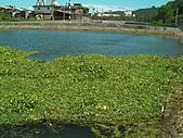 蘭陽大閘蟹:SANY3513.JPG