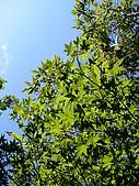 太平山-翠峰湖環山步道:SANY0780.JPG