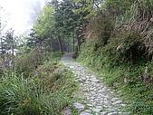 棲蘭馬告100神木之旅:DSCF5144