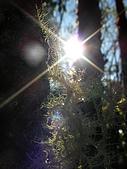 太平山-翠峰湖環山步道:SANY0771.JPG
