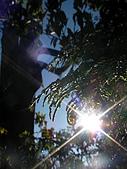 太平山-翠峰湖環山步道:SANY0774.JPG