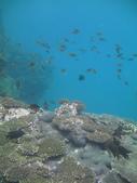 我要成為海賊王(蘇澳sup+浮潛):豆腐岬海底景觀1.jpg