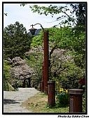 08.04.06 阿里山遊:IMG_4959.jpg