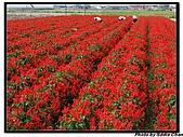 08.04.06 阿里山遊:IMG_5122.jpg