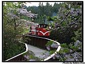 08.04.06 阿里山遊:IMG_4704.jpg